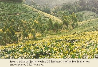 Oothu Tea Estate