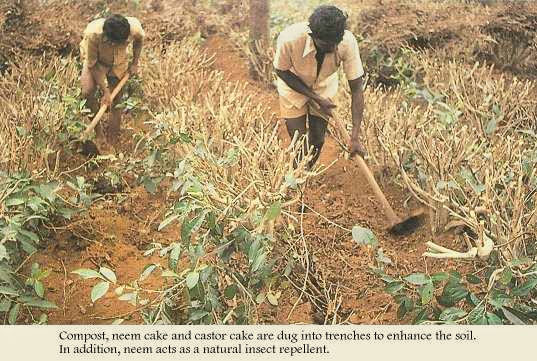 Enhancing the soil naturally