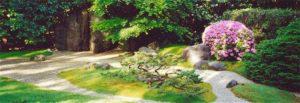 View of Zen Garden with bonsai and azalea
