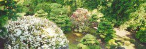 Dwarf trees in Sunken Garden