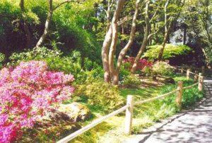 View of azaleas down Maple Lane