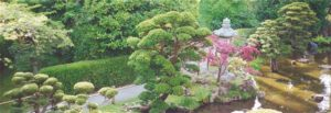 View of dwarf trees and stone lantern around Main Pond