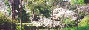 View of Cherry Tree Lane near South Gate