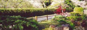 View of Cherry Tree Lane