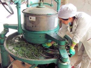 Closeup of tea leaf rolling machine