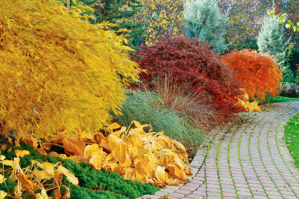 Very beautiful Japanese garden with maples of three colors at fall � Filip Fuxa, 2010 iStockphoto