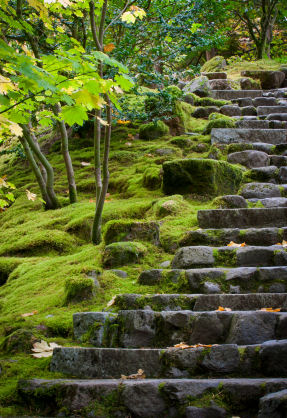 Stone steps lead up a moss-covered heavily landscaped slope in the Portland Japanese Garden, � Jonathan Cohen 2010 iStockphoto