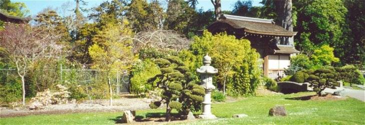 Stone Lantern and Dwarf Tree outside South Gate of Japanese Tea Garden