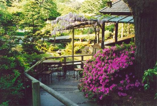 Azalea along pathway behind Tea House leading to wisteria-laden deck overlooking waterfall
