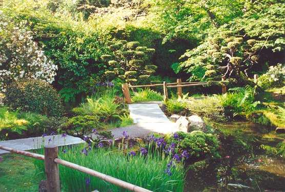 Tranquil view of iris and dwarf trees along pathway to Drum Bridge