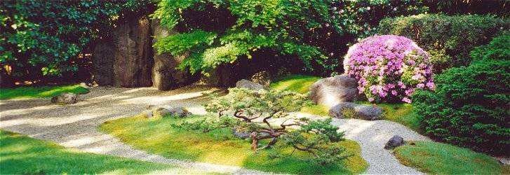 View of Zen Garden with bonsai and azalea
