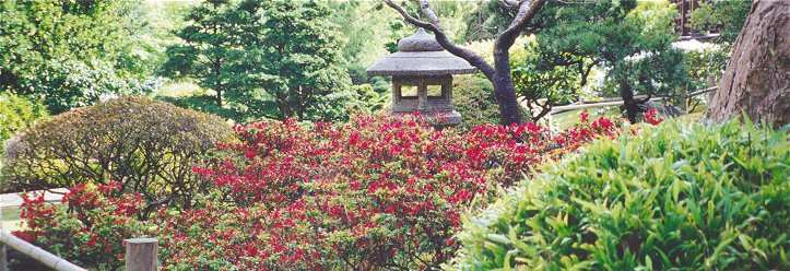 View stone lantern, flowering rhododendron and head of Dragon Hedge