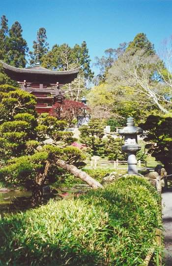 View of Torii, dwarf trees and stone lantern