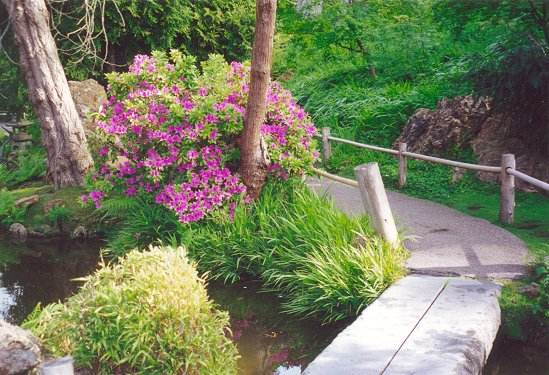 View of rhododendron in bloom along pathway across stone bridge