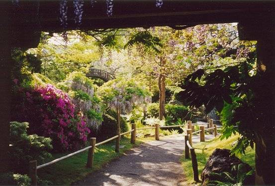 View of azalea and wisteria from under Long Bridge with Drum Bridge in background