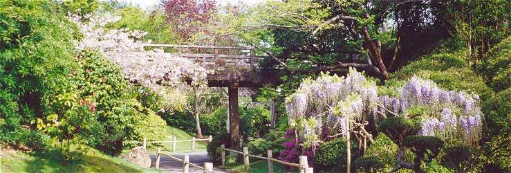 View of Long Bridge with wisteria and cherry blossoms