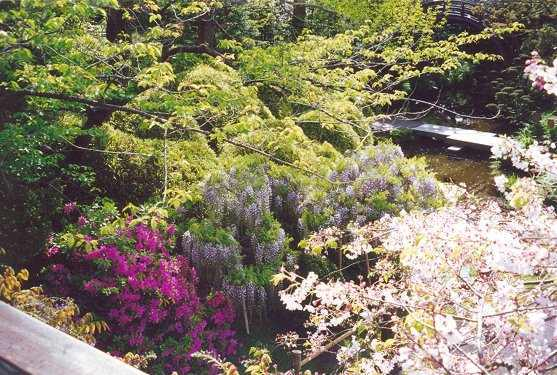 View of cherry blossoms, azalea and wisteria from Long Bridge with Drum Bridge in background