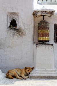 Prayer wheel and dog sleeping at Bothnath stupa in Kathmandu, Nepal © dutourdumonde, iStockphoto 2013