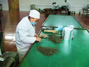 Final hand sorting of finished tea leaves